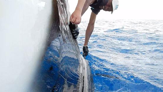 Tangage et relâche d'un voilier