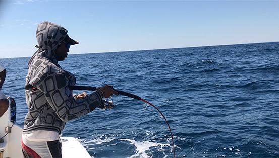 Requin pointe blanche 2