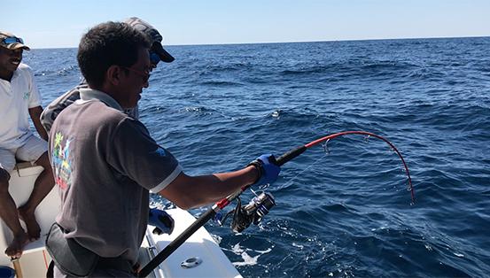 Requin pointe blanche 3