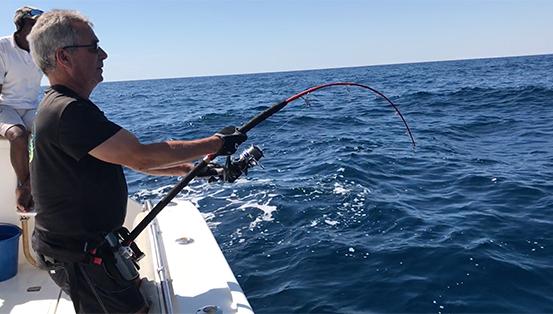 Requin pointe blanche 4