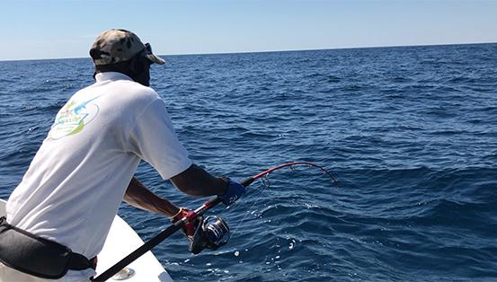 Requin pointe blanche 5