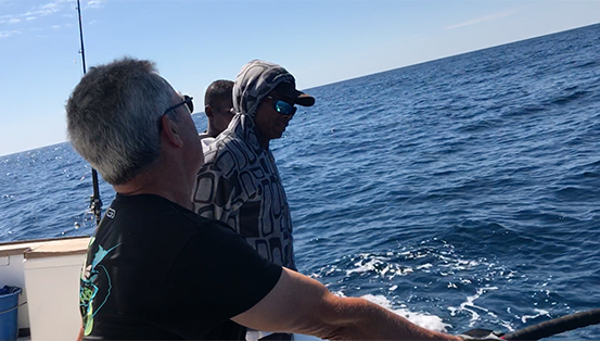 Requin pointe blanche 6