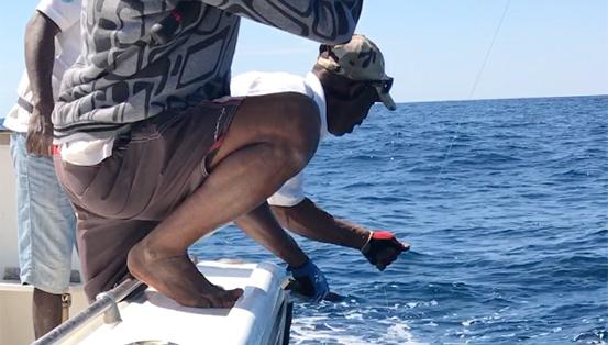 Requin pointe blanche 9